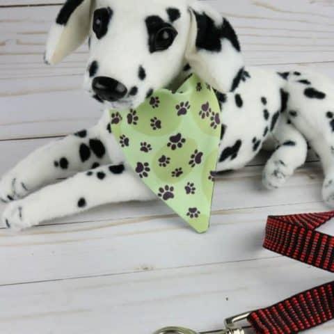 Dalmatian puppy wearing collar bandana