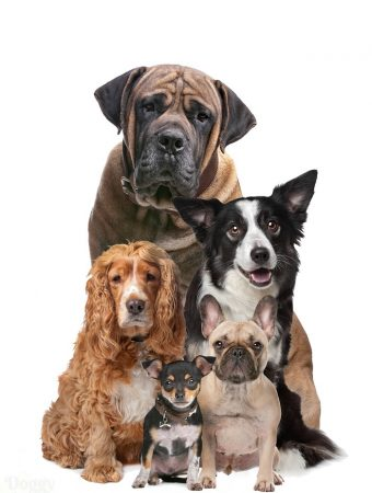 5 different dog breeds on white background