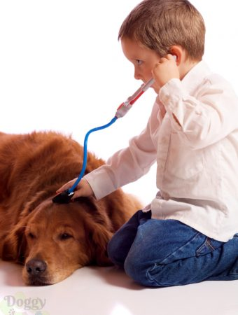 Kid playing Dr with a golden retriever that is one of the best dog breeds for kids